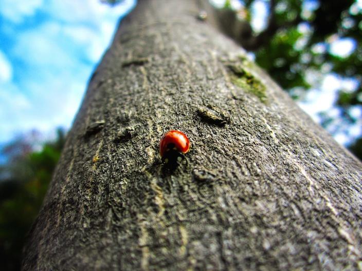 bug-log