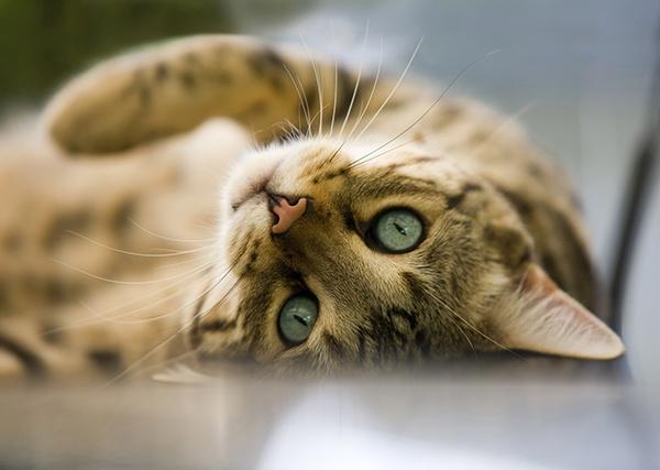 HQ_Cat_For_Web-1.jpg