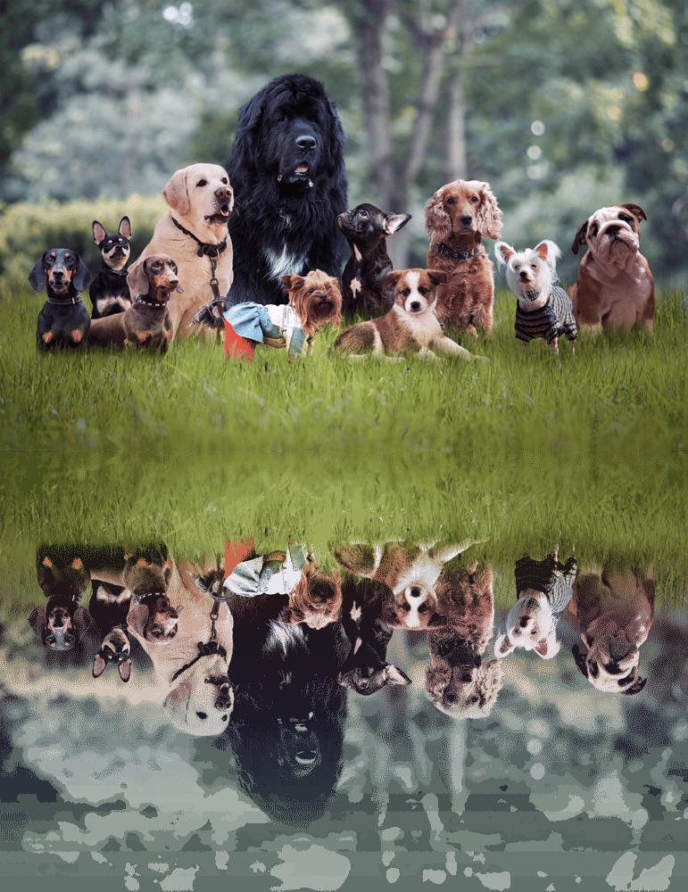 many animals-1